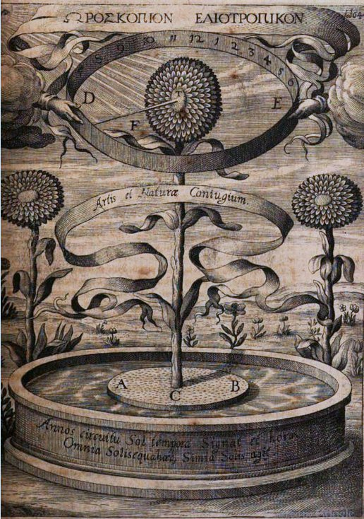 Kircher's sunflower clock as illustrated in his 1643 study on magnetism, Magnes sive de arte magnetica opus tripartitum (full version available on Googlebooks)